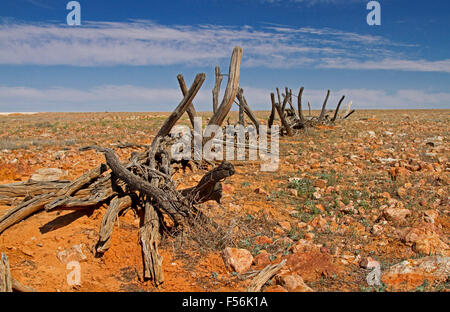 Remains of derelict timber stock yards on barren stony outback plains that stretch to horizon under blue sky, in - Stock Photo