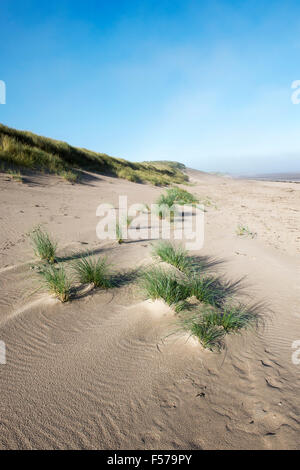Ammophila arenaria. Marram Grass growing in sand dunes on the beach. Scremerston, Berwick Upon Tweed, Northumberland, - Stock Photo