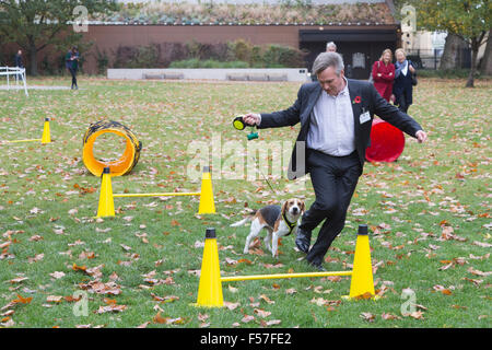 London, UK. 29th October, 2015. Henry Smith MP, Crawley, with his Beagle puppy Frisbee. Members of Parliament and - Stock Photo