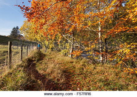 Pennine Way, near Holwick, Middleton-in-Teesdale, Co Durham, UK. 29th October 2015 The afternoon sun follows the - Stock Photo
