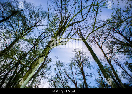 View from below of forest in Snežnik Castle, Slovenia - Stock Photo