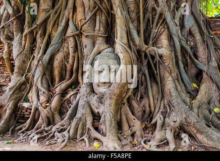 Buddha head statue in bodhi tree (Ficus religiosa) roots, Wat Mahathat, Ayutthaya, Thailand - Stock Photo