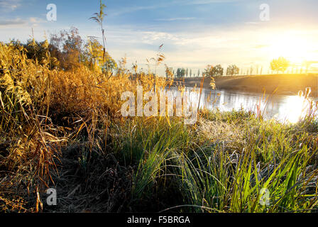 Dry grass on autumn river at sunrise - Stock Photo