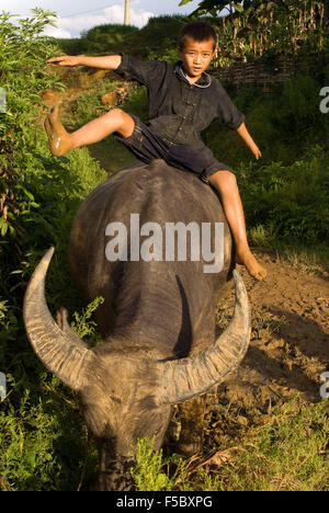 A child playing with a buffalo next to the rice terraces nearby of Lao Chai village. Trekking Sapa to Lao Chai. - Stock Photo