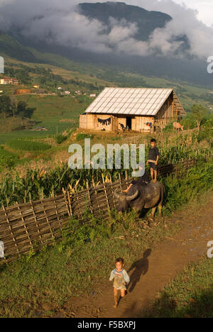 Children playing with a buffalo next to the rice terraces nearby of Lao Chai village. Trekking Sapa to Lao Chai. - Stock Photo