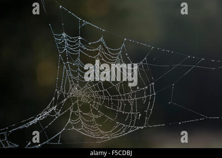 Cobweb covered in dew stretched out in the morning sun - Stock Photo