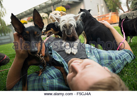 Dogs laying on top of man in grass - Stock Photo
