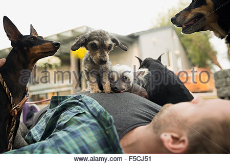 Dogs laying on top of man - Stock Photo