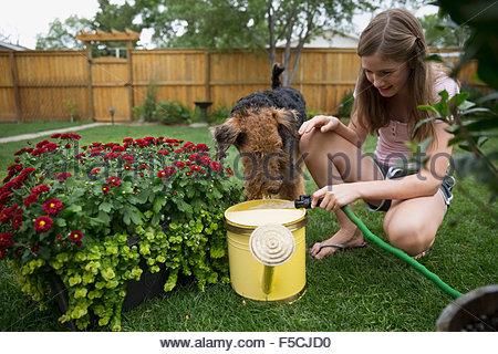 Dog watching girl filling watering can in backyard - Stock Photo
