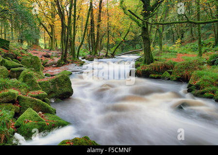 Stunning Autumn scenery as the river Fowey cascades over mossy rocks in woodland at Golitha Falls on the southern edge of Bodmin Stock Photo