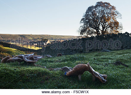 Holwick, Middleton-in-Teesdale, Co Durham UK 2nd November 2015 Under a clear blue sky the early morning light catches - Stock Photo