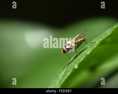 fly ready to take off - Stock Photo