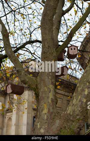 Bird boxes hanging in trees, Liverpool, Merseyside, UK - Stock Photo