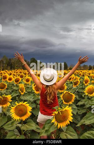 A young woman in a sunflowers field near Herrera de Pisuerga, Palencia, Castilla Leon, Spain. - Stock Photo
