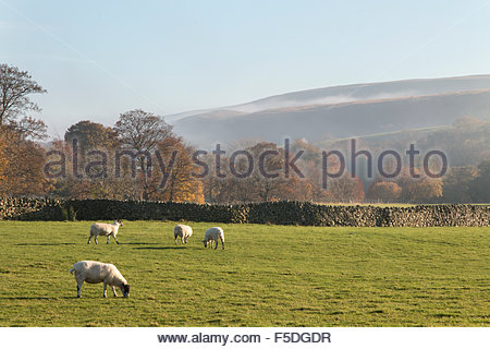 Holwick, Middleton-in-Teesdale, Co Durham UK 2nd November 2015 Fog creeps up the Teesdale valley as it quickly replaces - Stock Photo
