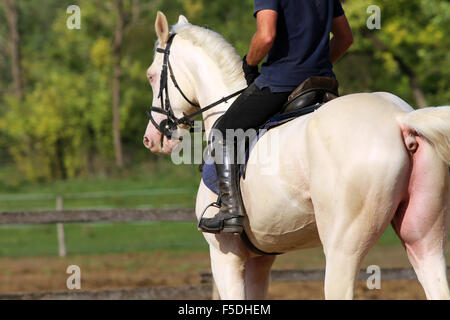 Rider and a beautiful dressage horse galloping in the corral - Stock Photo