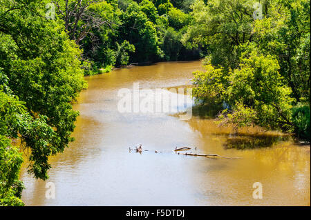 Slow muddy brown river with dead branches in middle, passing through lush green forest. - Stock Photo