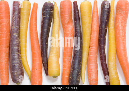 Daucus carota. Colourful miniature carrots. - Stock Photo