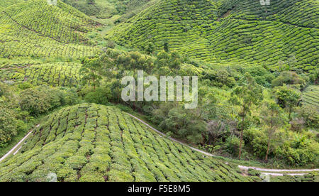 Panoramic view of the tea plantations in the Cameron Highlands, Malaysia, Southeast Asia, Asia - Stock Photo