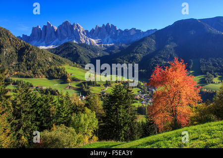Colorful autumn trees frame the group of Odle and the village of St. Magdalena, Funes Valley, South Tyrol, Dolomites, - Stock Photo