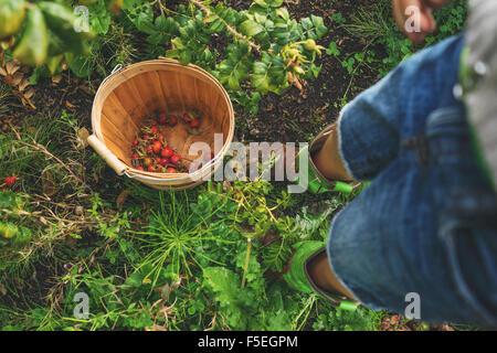 Boy picking rosehips - Stock Photo