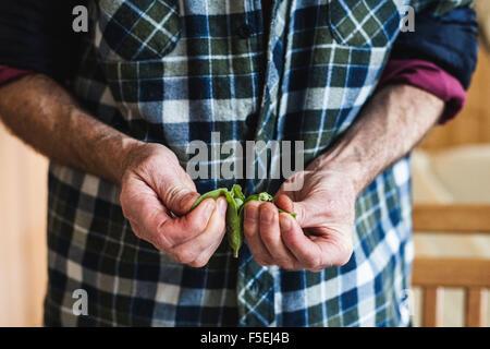 Senior man shelling fresh peas - Stock Photo