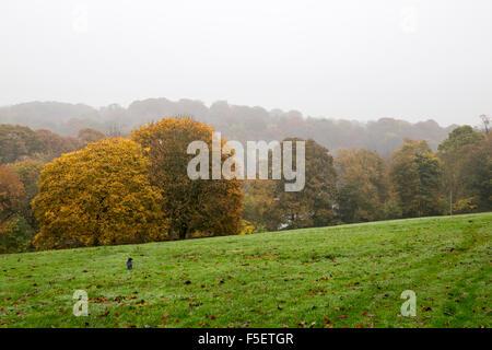 English park in Autumn.  Roundhay Park in Leeds November 2015 - Stock Photo