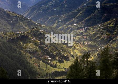 India, Himachal Pradesh, Shimla (Simla), terraced apple orchards on steep hillsides - Stock Photo