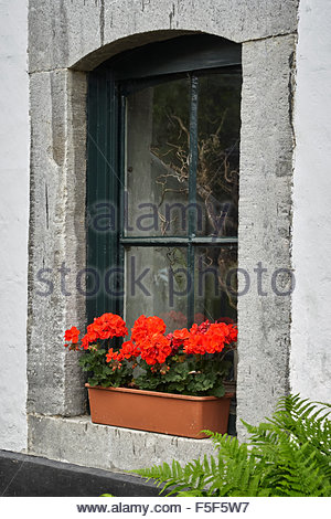 Red Geraniums on a windowsill in a plastic flower plant box - Stock Photo