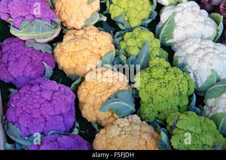 Harvested colorful cauliflowers, purple, orange, green & white. - Stock Photo