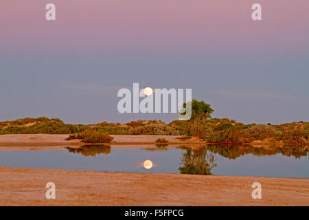 Full moon rising in pink & mauve sky at sunset reflected in calm water of pool at Montecollina artesian bore, outback - Stock Photo