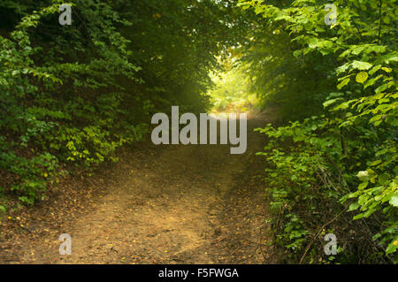 Dreamy forest path inviting you on a magical journey through the woods. - Stock Photo