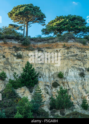 Cliffs from the beach at Branksome Chine, Poole, Dorset, UK. Taken on 27th September 2015. - Stock Photo