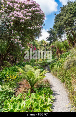 Rhododendron Valley at the center of Trebah Garden, Cornwall Stock ...