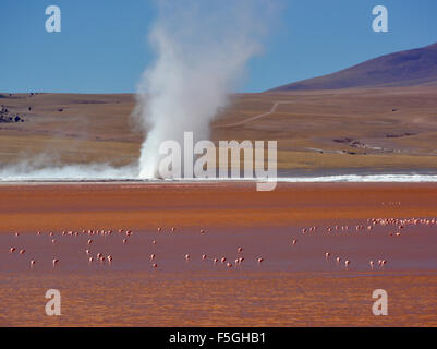Cyclone of borax sediment on a lake with flamingos (Phoenicopterus sp.) in red water, Laguna Colorada, Uyuni, Lipez, - Stock Photo