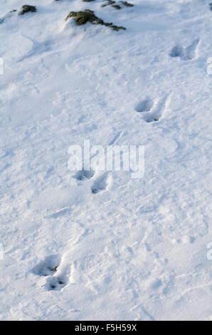 Animal Tracks in Snow at Winter Daytime Vertical - Stock Photo