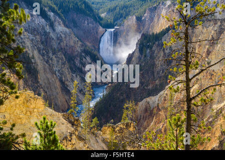 Lower Falls and Grand Canyon of the Yellowstone, from Artists Point, Yellowstone National Park, Wyoming, USA