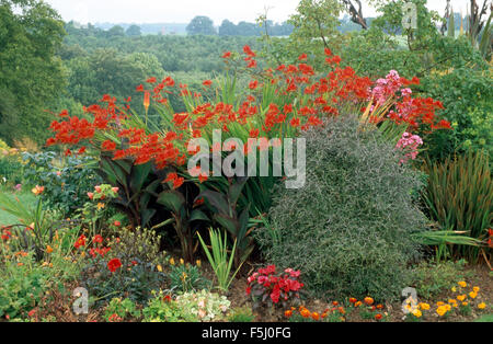 Tall red Crocosmia Lucifer in summer border in large country garden - Stock Photo