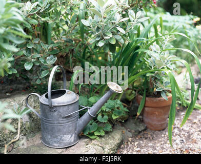 Vintage galvanized zinc watering can beside green shrubs in a garden border - Stock Photo