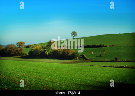 countryside in Zuid Limburg, Netherlands - Stock Photo