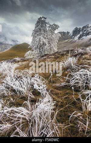 Hoar frost covered grass and trees, Col de Lautaret, France - Stock Photo