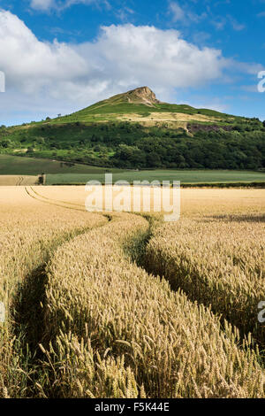 Ripe Wheat Field under Roseberry Topping, North Yorkshire - Stock Photo