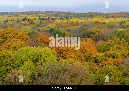 Hainich National Park, Thuringia, Germany - Stock Photo