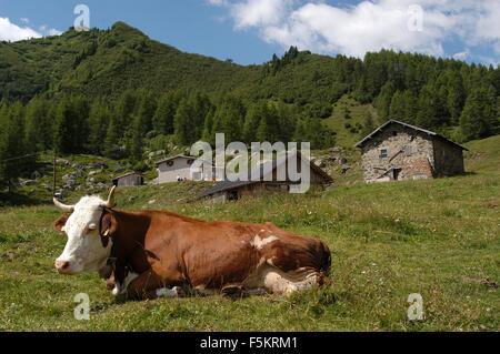 Laste di Rocca Pietore,  Agordino, Belluno,cow   Credit © Marco Bruzzo/Sintesi/Alamy Stock Photo - Stock Photo
