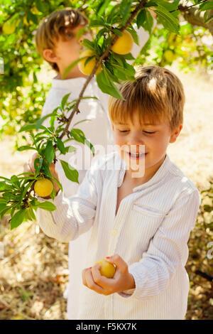 Spain, Menorca, Boys ( 4-5, 6-7) picking up fruits Stock Photo