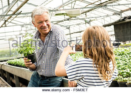 Granddaughter using smartphone to take photograph of grandfather holding potted herb plant in hothouse - Stock Photo