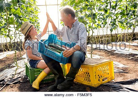 Grandfather and granddaughter in hothouse sitting on crates holding cucumbers doing high five - Stock Photo