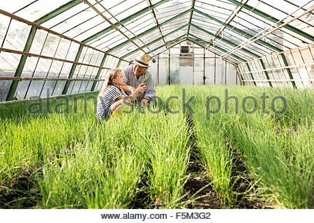Grandfather and granddaughter in hothouse checking quality of chive plants - Stock Photo