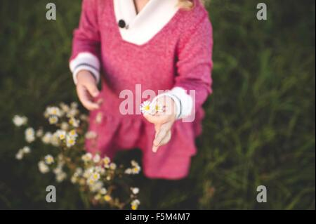 Cropped shot of girl picking wildflowers in field - Stock Photo