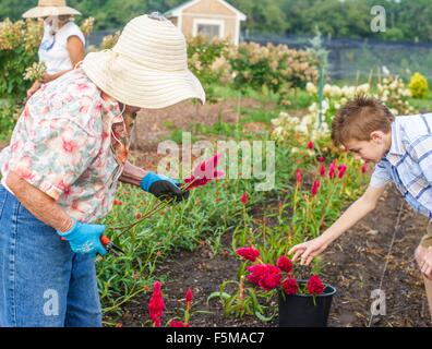 Senior woman and grandson harvesting flowers on farm - Stock Photo